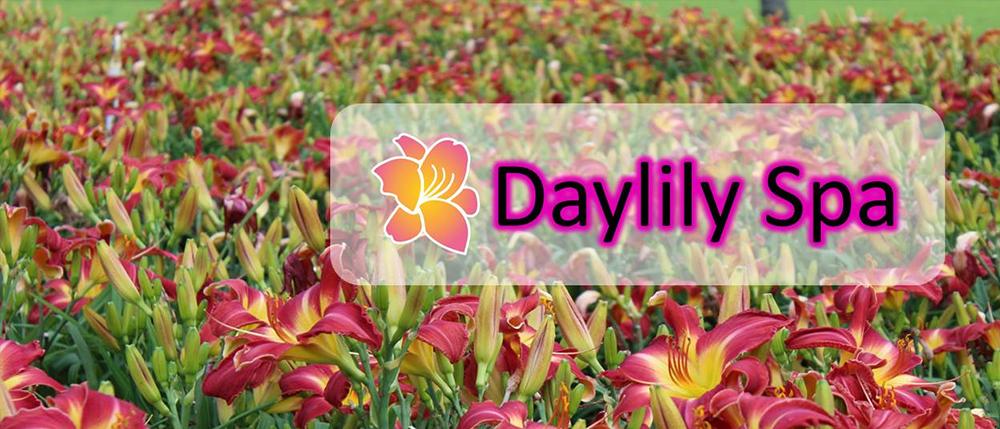 Daylily Spa